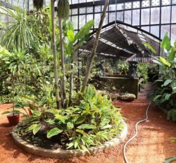 El jard n bot nico conservar 16 especies de plantas for Jardin botanico medicinal